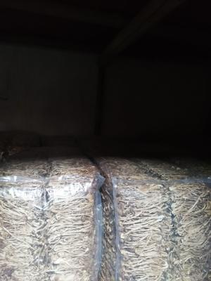 福建省宁德市屏南县古田茶树菇 16cm以上 未开伞 干茶树菇