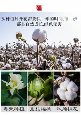辽宁省锦州市义县平原棉花