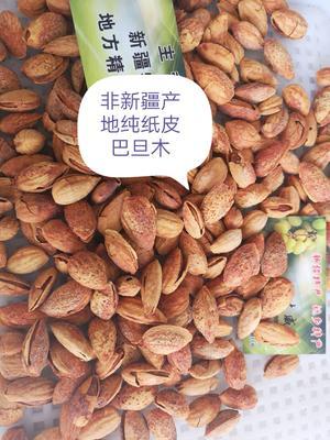 河北省邯郸市邯山区巴旦木  1年 带壳 纯纸皮