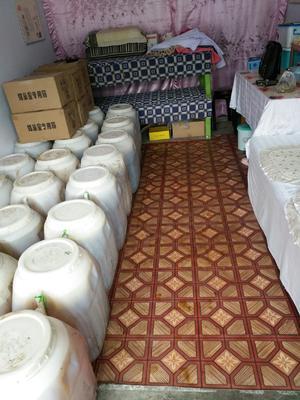 黑龙江省牡丹江市东宁县椴树蜜 塑料瓶装 2年以上 100%