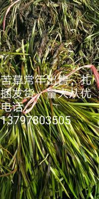 湖北省咸宁市崇阳县苦草  长期出售苦草,狐尾藻