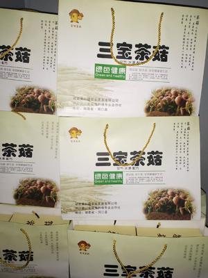 湖南省邵阳市洞口县棕褐色帽茶树菇 8~10cm 未开伞 干茶树菇