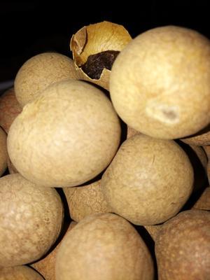 青海省西宁市城东区泰国桂圆干  箱装 优等 带壳 泰国桂园干,优等品。
