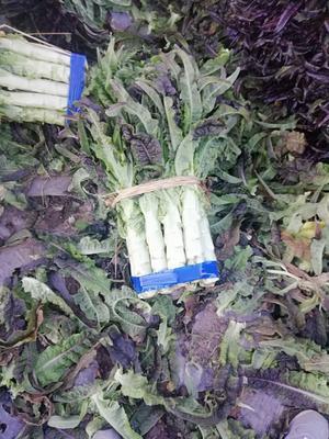 云南省大理白族自治州大理市红叶莴笋 1.5~2.0斤 40-50cm