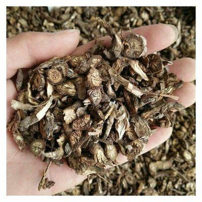 河北省保定市安国市白菌  野生 干货 白头翁出售数千种药材
