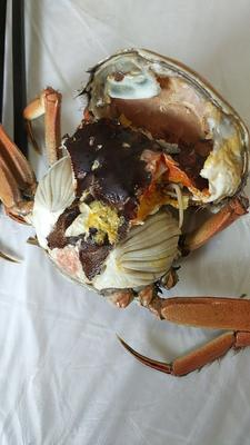 江苏省泰州市兴化市兴化螃蟹 1.85两 母蟹