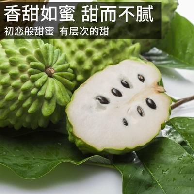 海南省海口市琼山区台湾释迦 350-450g