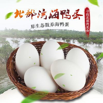 广西壮族自治区北海市海城区广西海鸭蛋 箱装