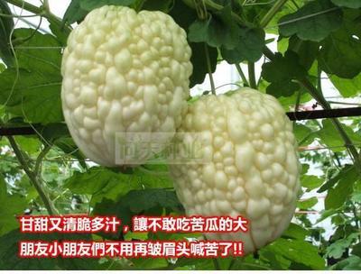 江西省南昌市南昌县苹果苦瓜种子 袋装