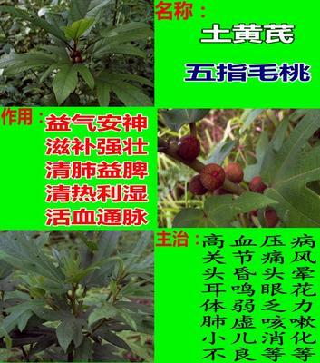 广西壮族自治区玉林市容县土黄芪五指毛桃