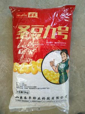 山东省济宁市市中区黄豆种子 大田用种 ≥99% ≥85% ≤12%