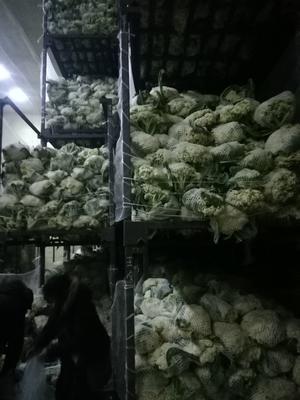 河南省开封市祥符区有机花菜 松散 混装通货