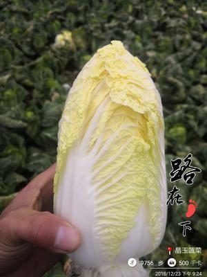 湖北省荆门市钟祥市华耐B1102娃娃菜 5~7两以上