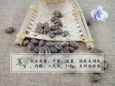 河北省保定市安国市茄子种子  毕澄茄 中药材批发