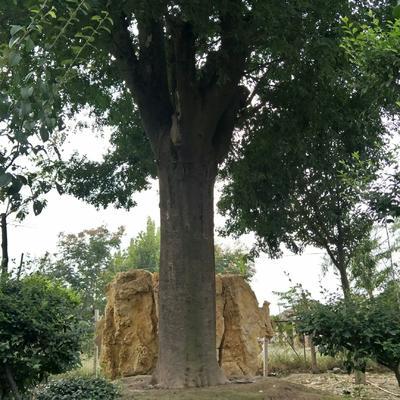 河南省商丘市睢阳区皂角树