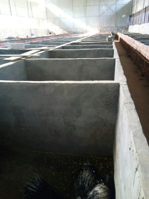 广西壮族自治区河池市宜州市广西豪猪 100斤以上
