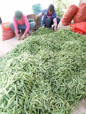 云南省临沧市凤庆县甜脆豌豆 7-10cm