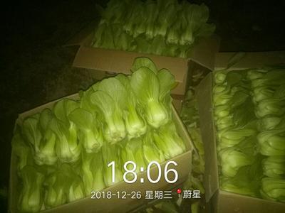 山西省朔州市朔城区大油菜 3~4两