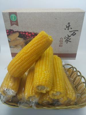 黑龙江省双鸭山市尖山区糯玉米 去壳 甜糯