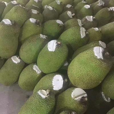 广西壮族自治区崇左市凭祥市越南菠萝蜜 10-15斤