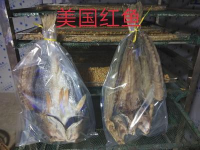 广西壮族自治区钦州市钦南区美国红鱼 人工养殖 1-1.5公斤