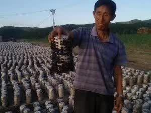 黑龙江省牡丹江市海林市干春耳 半年