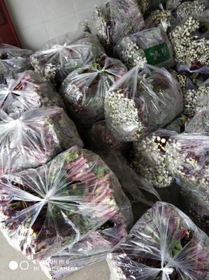 湖北省孝感市汉川市红菜苔 30~35cm