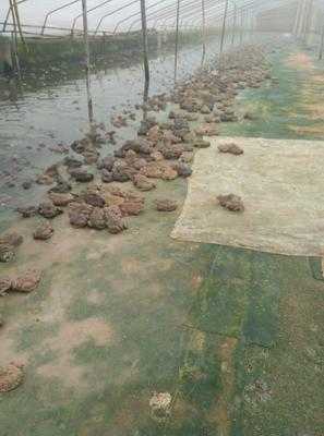 广西壮族自治区南宁市西乡塘区泰蛙