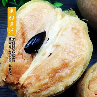 广东省茂名市电白区人心果