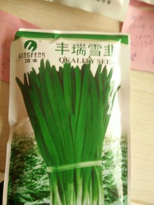 河北省邯郸市临漳县韭菜种子 袋装
