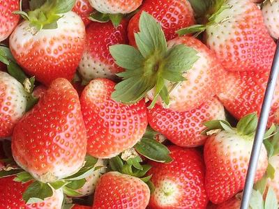 江苏省徐州市贾汪区奶油草莓 20克以上
