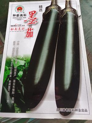 湖北省十堰市郧西县茄子种子 常规种 ≥80%