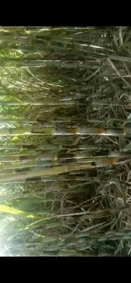 这是一张关于甘蔗原汁红糖 的产品图片