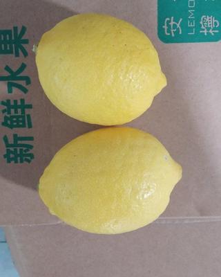 四川省资阳市安岳县尤力克柠檬 5 - 6两