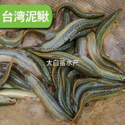 湖南省郴州市资兴市台湾泥鳅 人工养殖 15cm以上 35尾/公斤