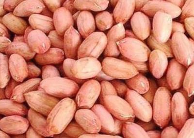 山东省日照市莒县油料花生米 24个月以上 袋装
