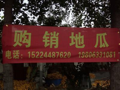山东省日照市东港区紫罗兰紫薯 混装通货