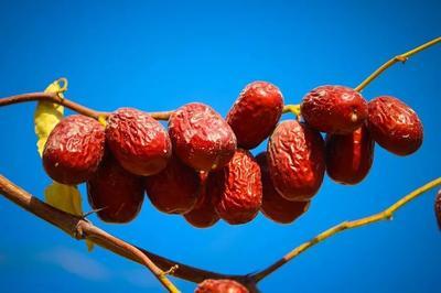 这是一张关于新疆红枣 合格品 的产品图片