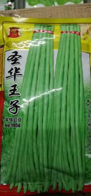 四川省成都市成华区长青豆角种子 圣华王子