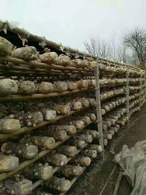 湖北省随州市随县剪柄香菇 袋装 1年以上