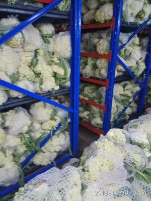 河南省开封市通许县有机花菜 松散 2~3斤