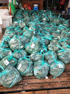 江苏省南京市高淳区固城湖河蟹 3.5-4.0两 公蟹