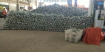 云南省西双版纳傣族自治州景洪市香冬瓜 2~6斤 地冬瓜