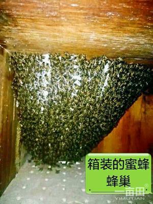 云南省玉溪市易门县中华蜜蜂