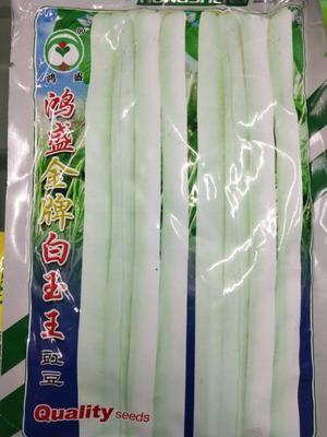 四川省成都市成华区白皮豆角种子 ≥95% 白玉王