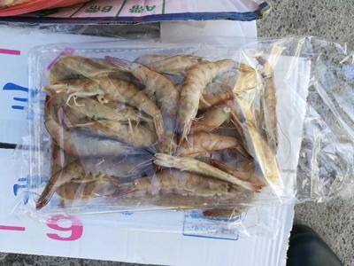 山东省滨州市沾化区南美白对虾 人工殖养 5-7钱