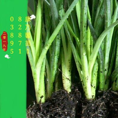 云南省昆明市呈贡区康乃馨
