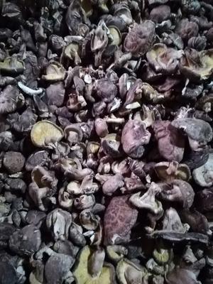 河南省平顶山市鲁山县原木干香菇 箱装 半年