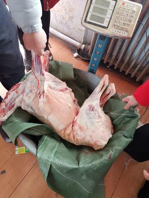 新疆维吾尔自治区博尔塔拉蒙古自治州博乐市绵羊肉 生肉