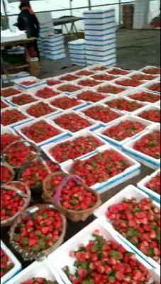 江苏省徐州市贾汪区宁玉草莓 20克以上